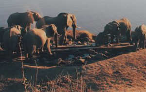 Big 5-naturreservat vid Victoriafallen