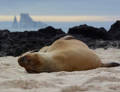 Djur- och naturbevarande på Galapagos