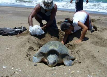 Turtle 12